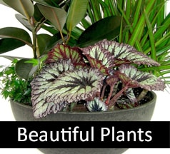 Beautiful Plants