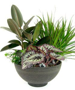 Plant E