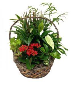 Plant a