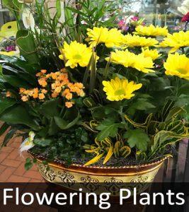 Flowering Plants 1