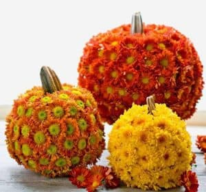 Source: https://betweennapsontheporch.net/what-to-do-with-those-left-over-pumpkins-gourds/