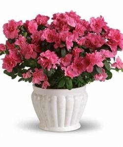 Plant C
