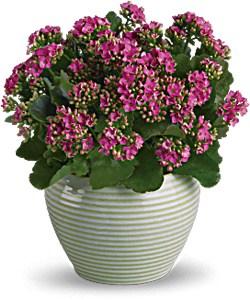 Plant F