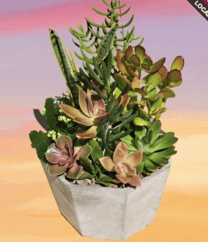 Celebrate Green Plants During National Indoor Plant Week